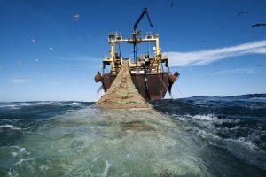 الثروة البحرية: تتميز بالوفرة و التنوع و تهدده مخاطر الإستنزاف و الإنقراض…