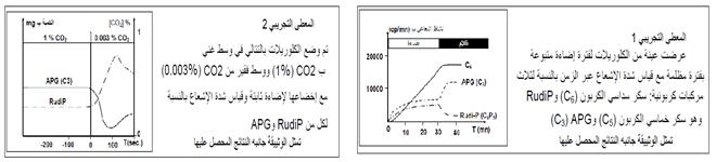 تحليل: في الثواني الأولى يظهر الإشعاع في الحمض الفوسفوغلیسیري APG والذي هو عبارة عن جزيئة ثلاثية الكربون، ثم السكر السداسي أحادي الفوسفاط متبوعا بالسكر الخماسي ثنائي الفوسفاط RudiP، ثم يظهر الاشعاع داخل مواد عضوية معقدة أكثر كالأحماض الأمينية والأحماض الذهنية والسكروز ....  استنتاج: يتحول الكربون المعدني إلى كربون عضوي يتم إدماجه داخل المواد العضوية.